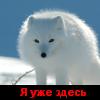 Телеграм-канал про Псковски... - последнее сообщение от Алхимик